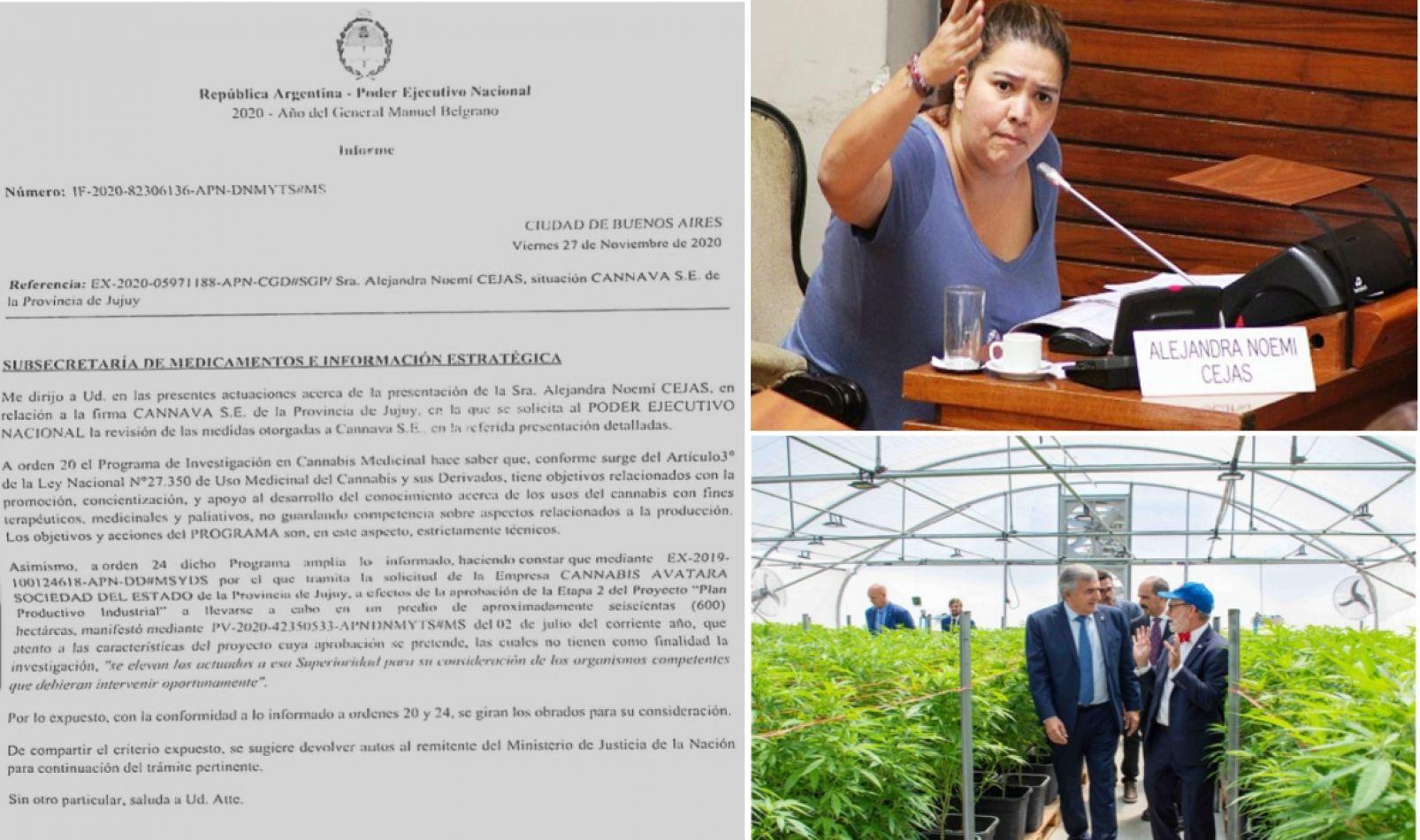 Desmienten que Cannava haya obtenido autorización para extender el cultivo de cannabis medicinal